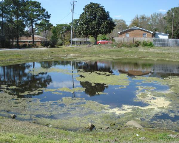 Brewster Place Pond Before