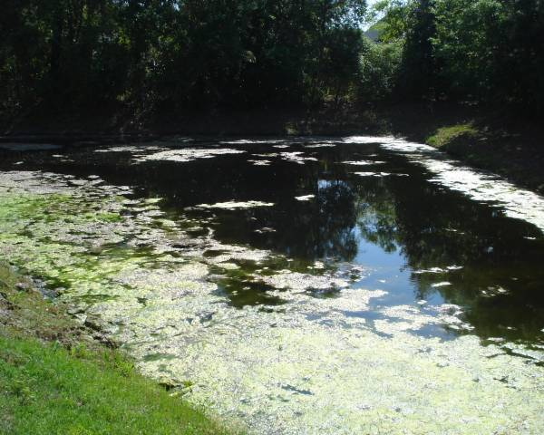 Leeward Village Pond Before