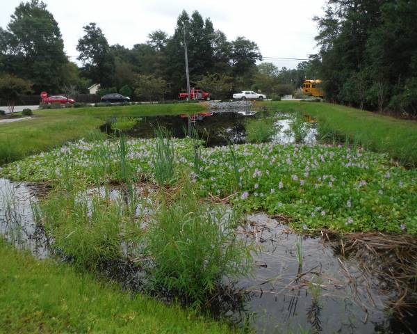 The Holy Cross Pond Before